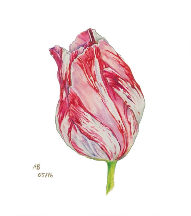 Pink Tulip - Ua Artworks