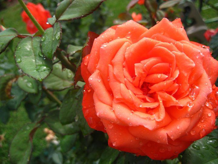 Peach - FerrellNomad