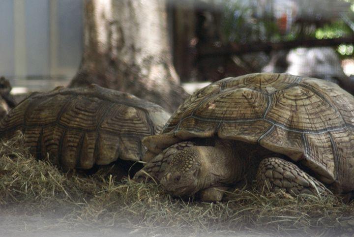 Tortoise - Shelley Photography