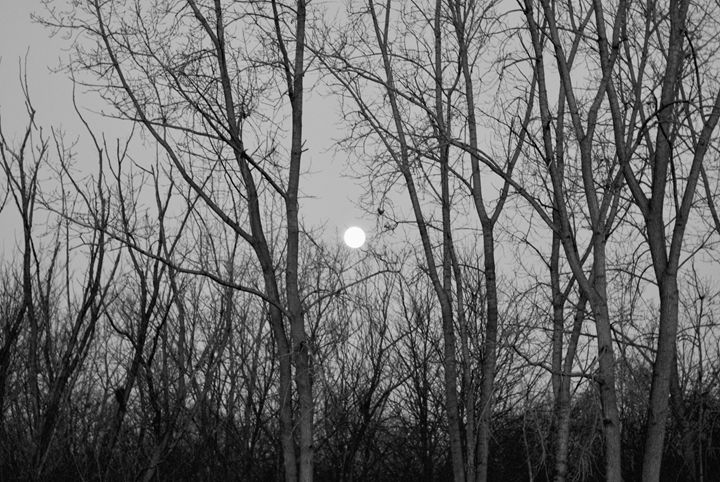 full moon through the trees - Shelley Photography