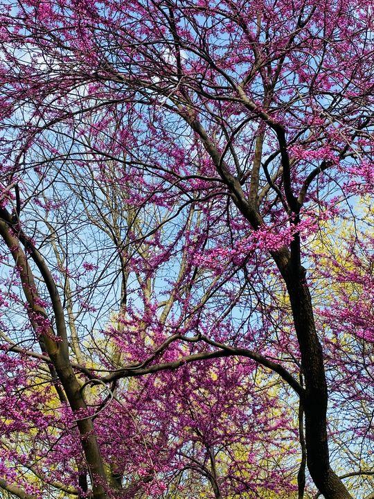 Spring - Art anything