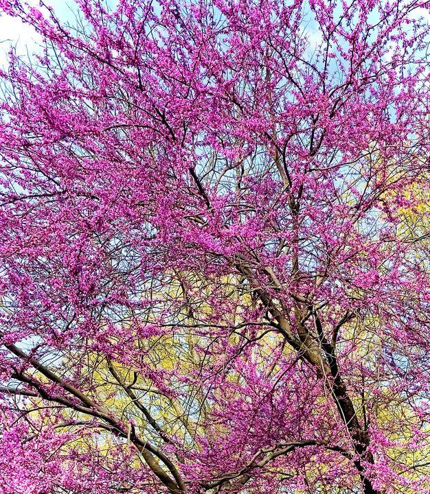 A purple tree - Art anything