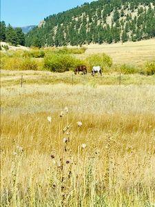 Horses near mountain