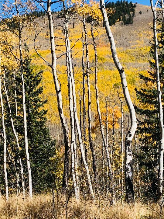 Mountain View through trees - Art anything