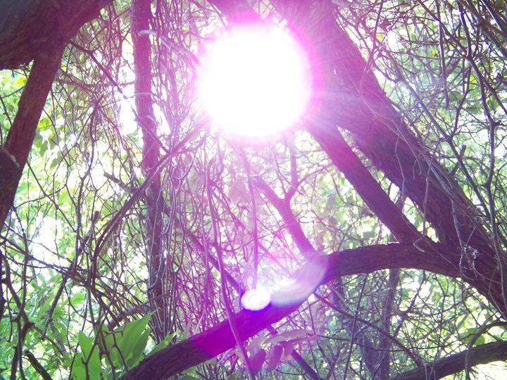 Woods - Subvesive Verses