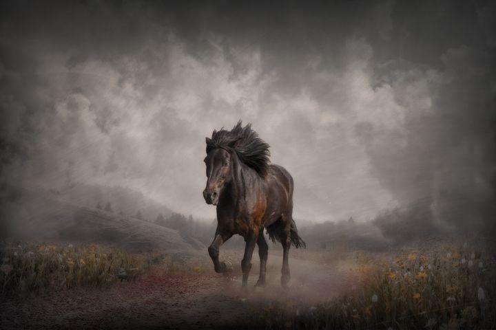 The Long Road Home - Jennifer Woodward