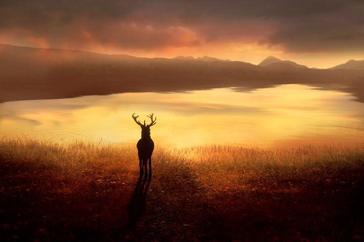 Peaceful Dawn - Jennifer Woodward