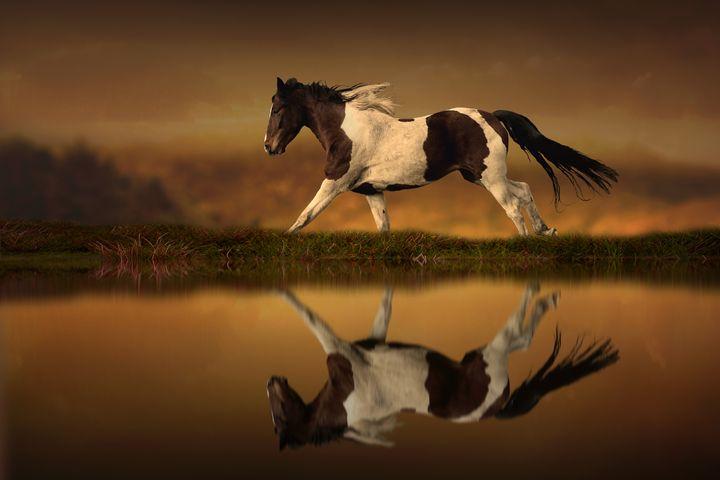The Horse's Journey - Jennifer Woodward