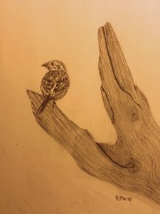 Sparrow - Randy Maske Artist