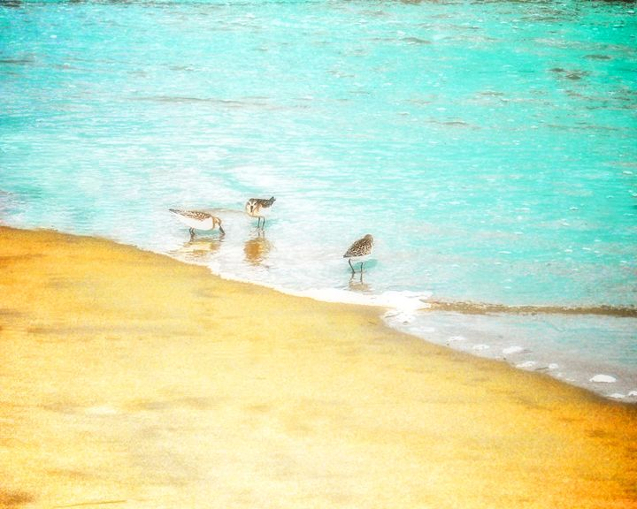 Sea Birds on the beach - Life Travels Photography