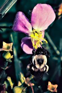 Meadow Bee-auty
