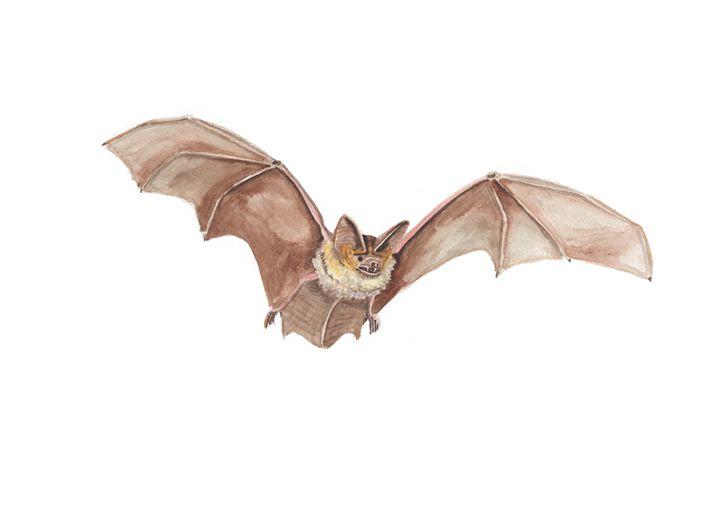 Flying Bat - The Montessori Company