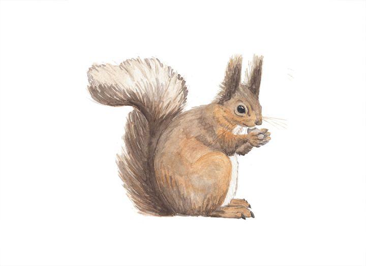 Squirrel - The Montessori Company