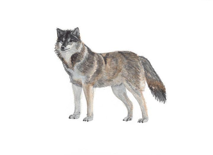 Wolf - The Montessori Company