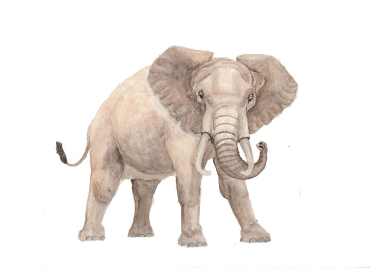 African Elephant - The Montessori Company