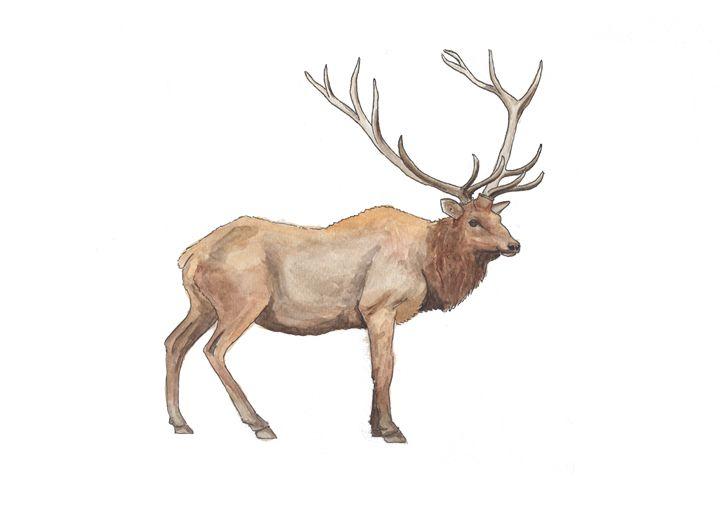 Elk - The Montessori Company