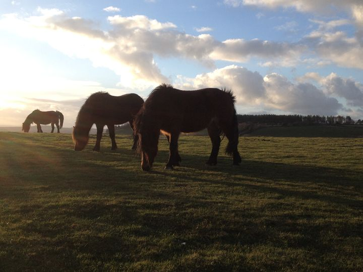 Ponies in Sidmouth - Phaedra's Photography