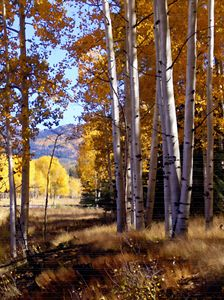 Autumn Paint, Chama, New Mexico