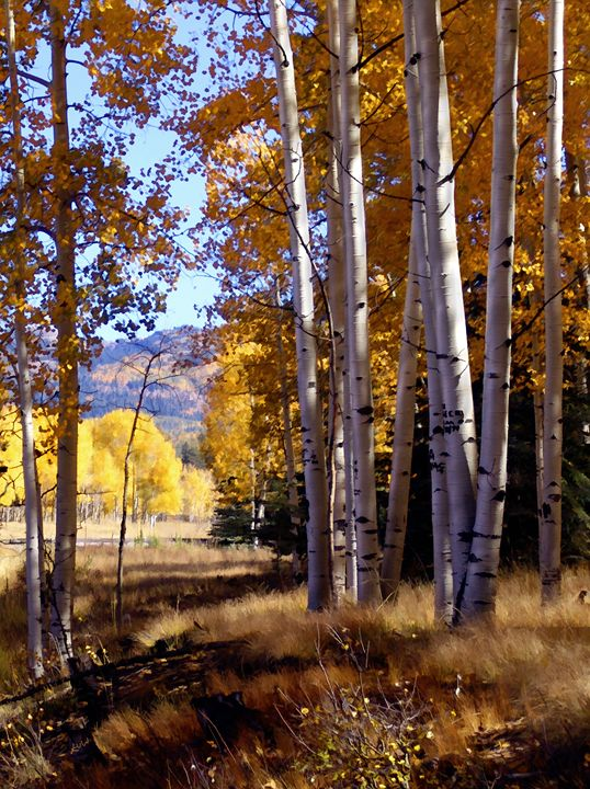 Autumn Paint, Chama, New Mexico - Fine Art Photography by Kurt Van Wagner