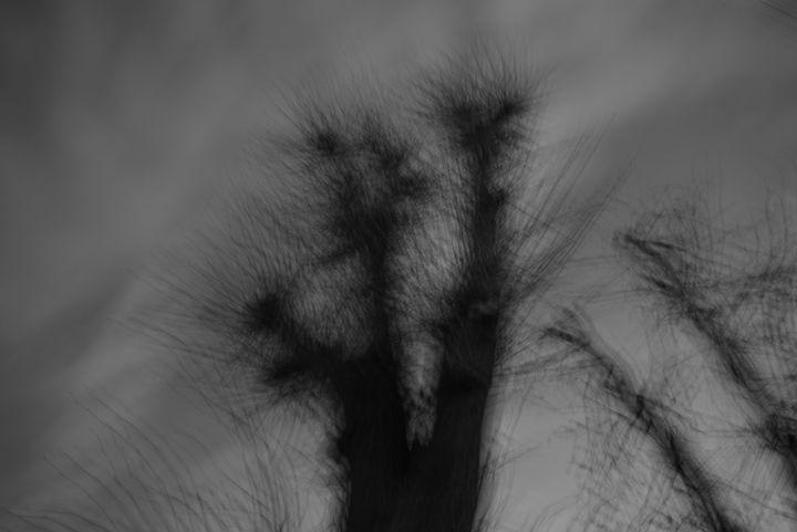trees at dusk - Henyk