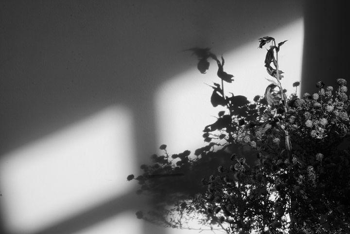 flowers - Henyk