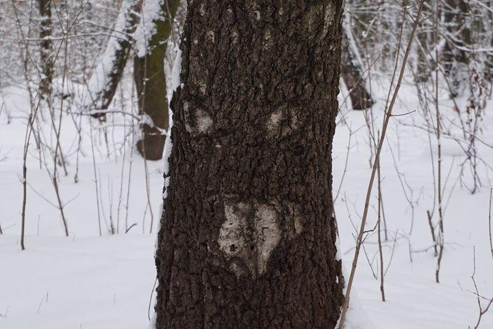 tree trunk - Henyk