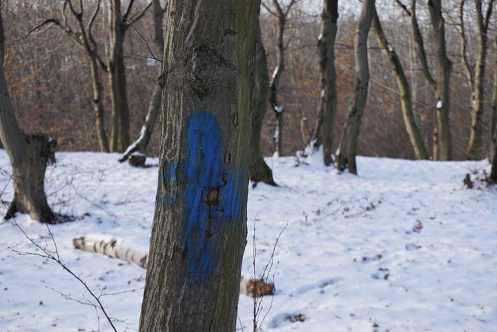 blue spot - Henyk