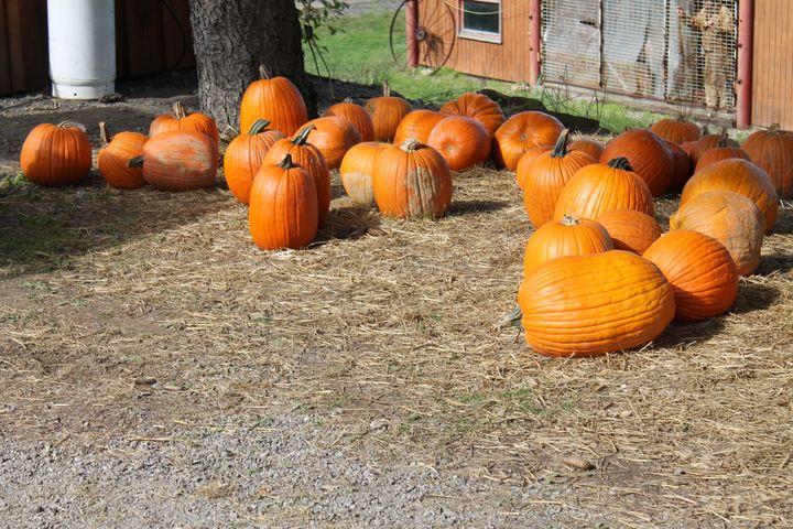 Harvest Weekend - Justin's Works
