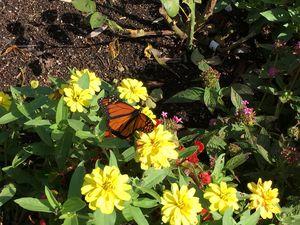 Flawless Butterfly