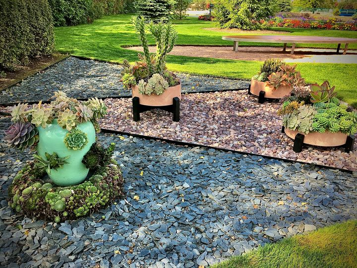 Prickly Cactus! - Paradise Gallery