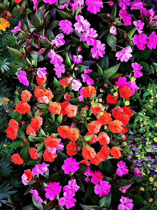 Painted Flowers - Paradise Gallery