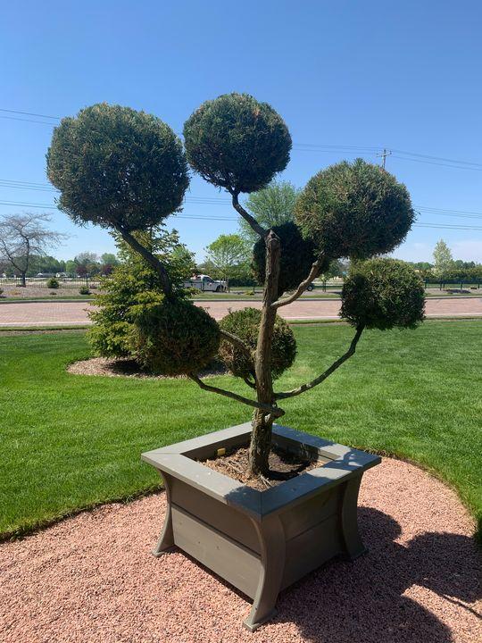 Tree Artem - Paradise Gallery