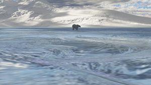 The Last Polar Bear - Digital Art Prints