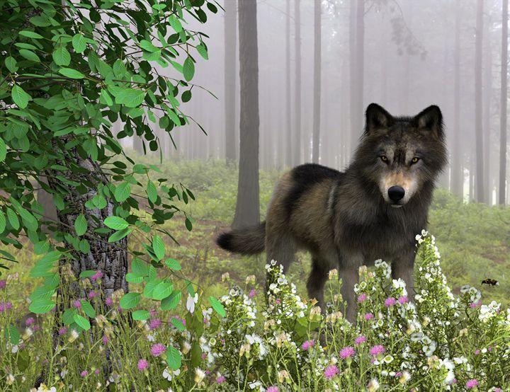 Spring Wolf - Digital Art Prints