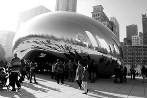 Chicago Bean - Bree|Clifton  Creative-Nature Photography