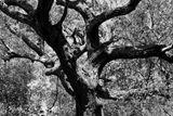 8x10 Cracking Black and White print