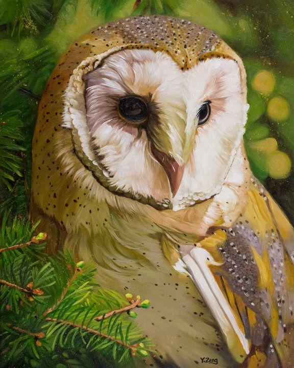 Barn owl oil painting - Yue Zeng