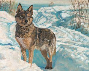 German Shepherd in snow - Yue Zeng