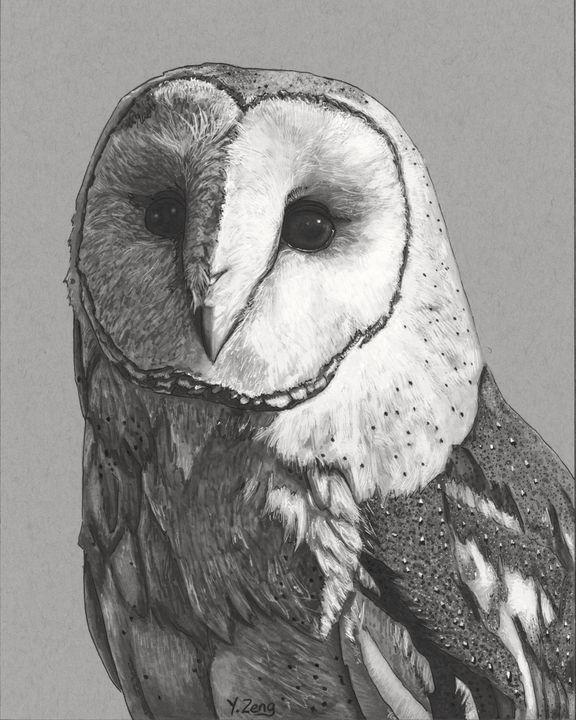 Ink drawing - Barn owl - Yue Zeng