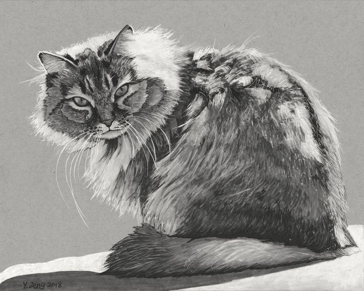 Ink drawing - Cat - Yue Zeng