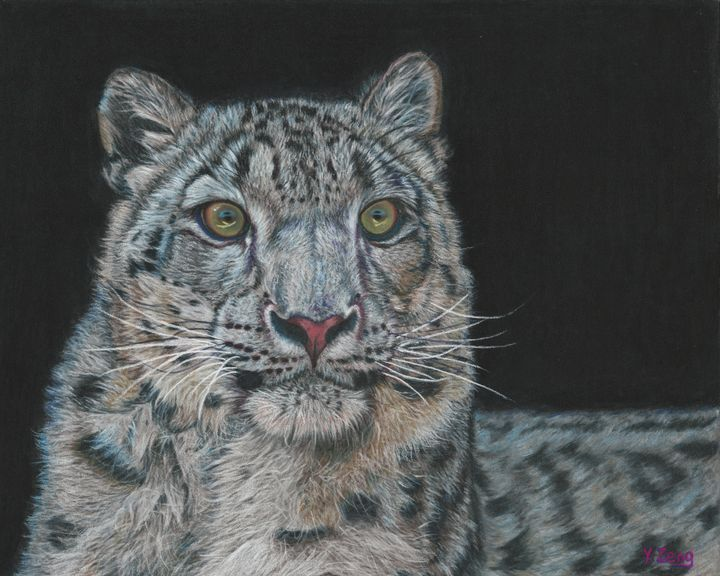 Pastel drawing - Snow leopard - Yue Zeng