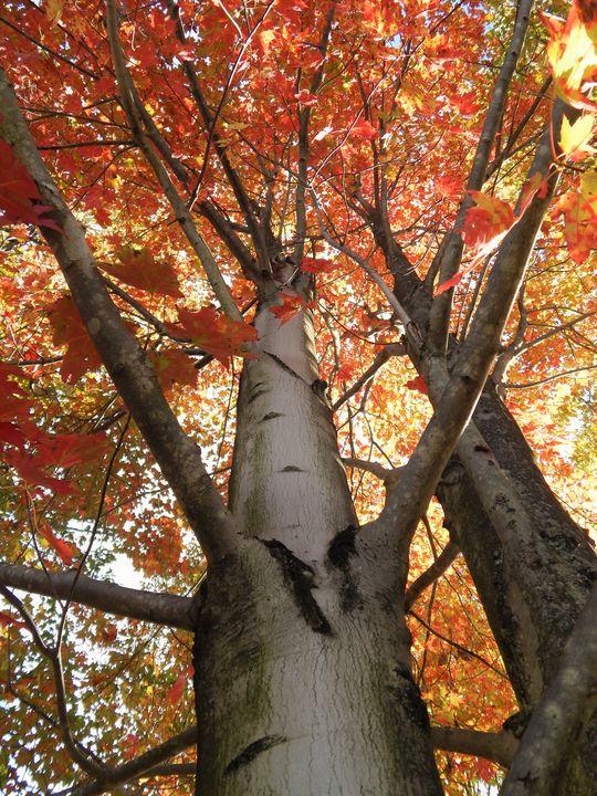 Autumn Brilliance - Nicole's Landscapes