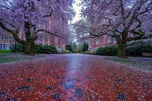 Alley of blossom - YURI LEVCHENKO PHOGRAPHY