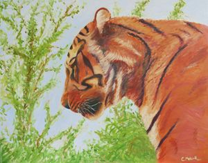 The Watchful Hunter (Tiger)