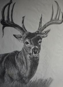 Sunset Buck