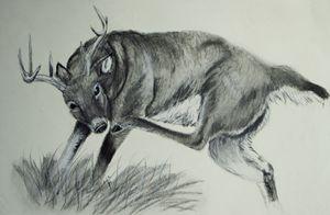 Scratching Buck