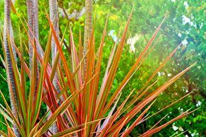 Autunm Palm