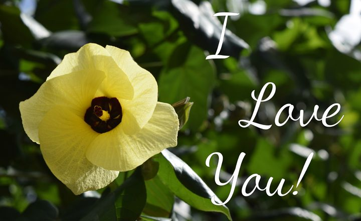 I Love You Hibiscus - Bmused Photography by B. Muses