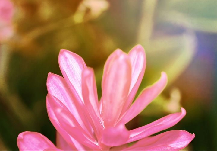 Metallic Pink - Bmused Photography by B. Muses