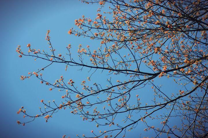 Orange Leaves 5 - phos illuminare